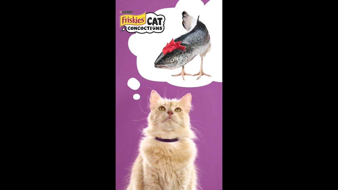 Youtube Cat Eye Tutorial: Cat Concoctions® Wet Cat Food