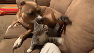 Live with Capone The Bully & Meeko