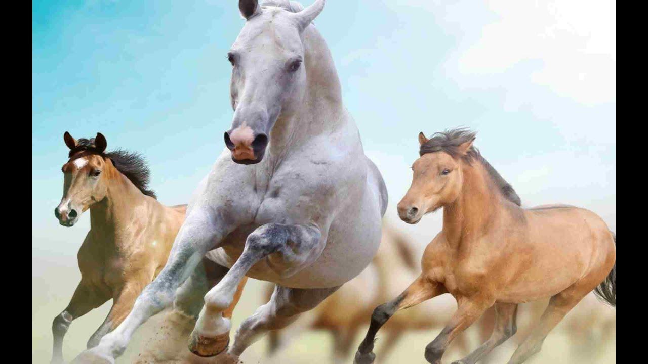 Significado de soñar con caballos o un caballo - YouTube