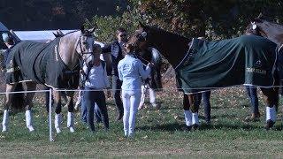 Military: paarden worden gekeurd in Boekelo