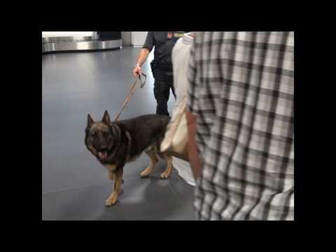 Bergamonews - Controlli della Finanza in aeroporto