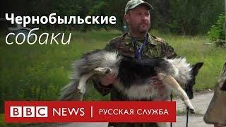 Чернобыль: как спасают собак в зоне отчуждения