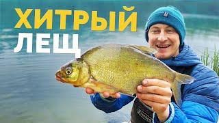 ХИТРЫЙ ЛЕЩ! Ловля фидером на реке! СУМАСШЕДШИЙ КЛЕВ после дождя! Минимализм и спонтанная рыбалка!