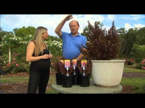 The Garden Gurus - Featured Plant Coprosma Pacific Sunset