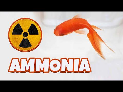 Ammonia In Aquarium Or Tank – Causes, Reduction And Treatment