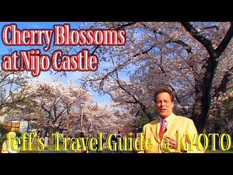 Cherry Blossoms at Nijo Castle