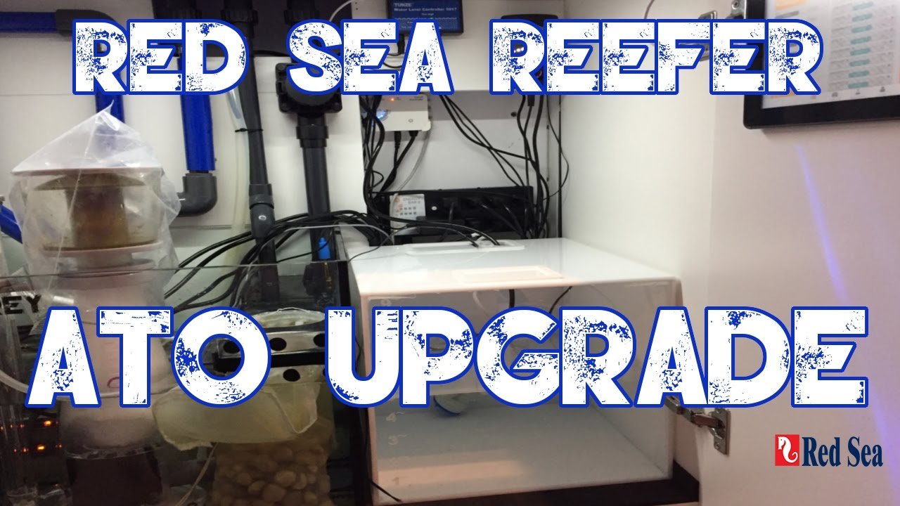 Red Sea Reefer 250 | Custom ATO Container | Blue Tide Acrylics | MORE  WATERRRRRRR