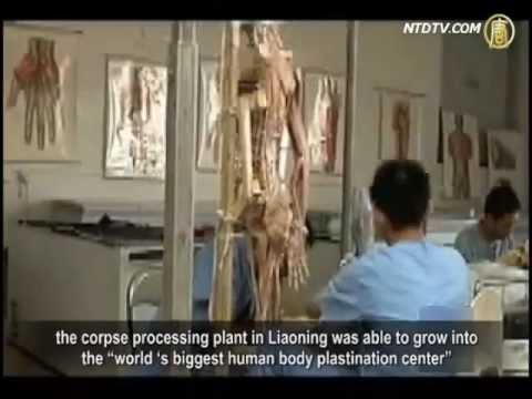 610 Self-Exposes Trading of Human Organs