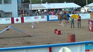 Halifax Co Exhibition Horse Dog Relay Team #5 - Lisa And Mercy
