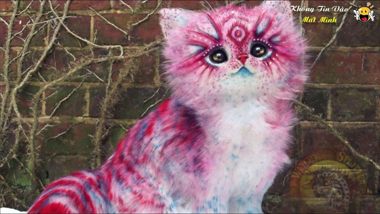 Những chú Mèo Đẹp Nhất thế giới bạn sẽ không tin vào mắt mình