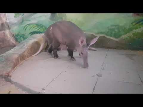 The way for aardvark lie down