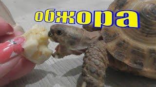 Вес Черепахи /Черепаха купание