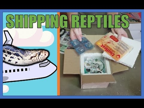 How to Ship Reptiles!