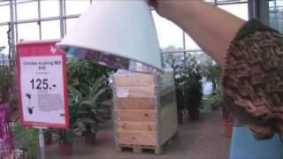 Toalillede väljavenimise vastu aitab taimelamp