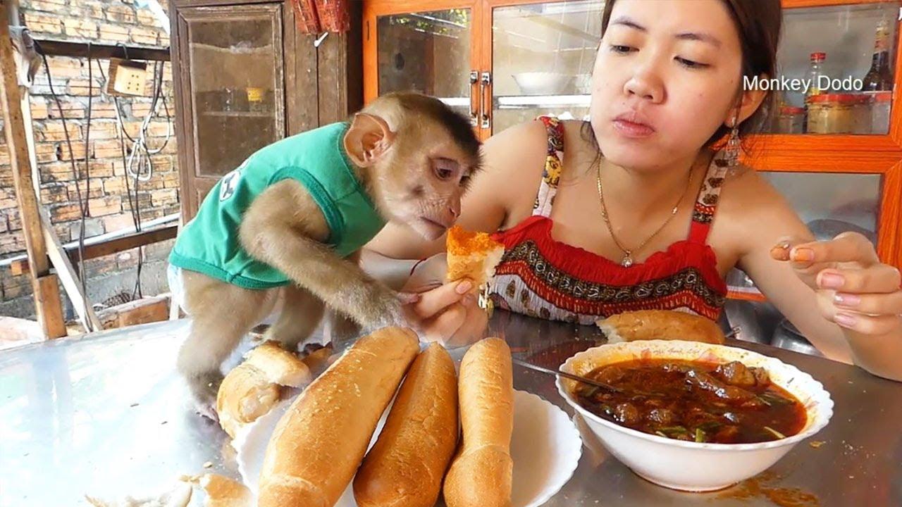 Monkey Dodo!!Dodo Tasty Beef Soup With Bread With Mom