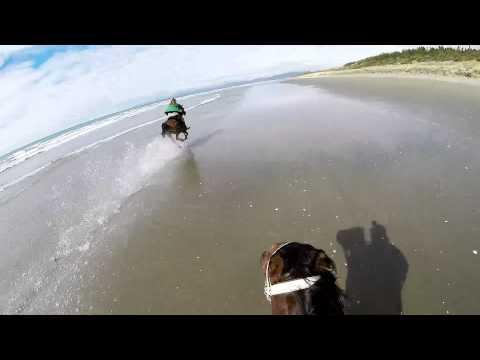 Horse Race on Beach