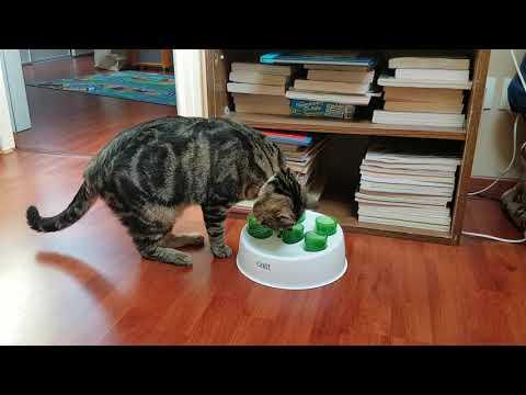 Tubes à croquettes catit senses 2 0 digger pour chat