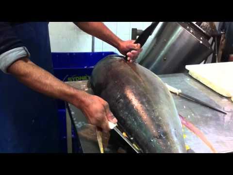 puila tonga @ chullora fish market