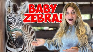 OMG! I PLAYED WITH A BABY ZEBRA!! *CUTE ANIMALS*