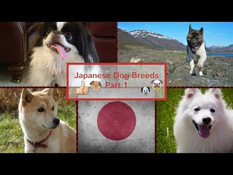 Japanese Dog Breeds Part 1