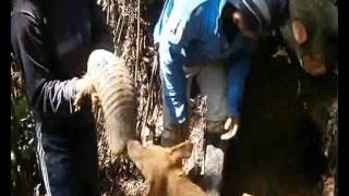 Cazadores de animales