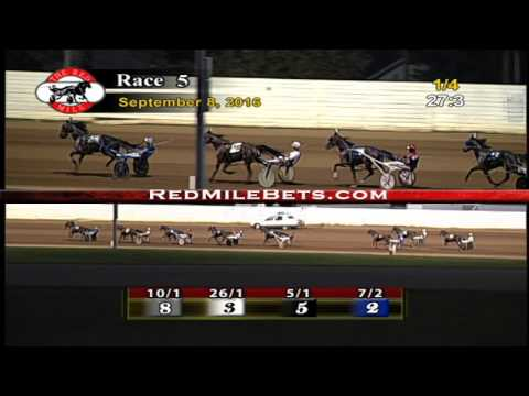 Red Mile Racetrack Race 5 9-8-2016