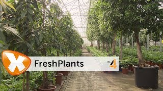 FreshPlants in Lifestyle Experience op RTL4
