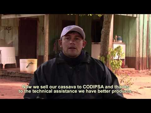 Cassava for economic development, USAID and Paraguay Productivo