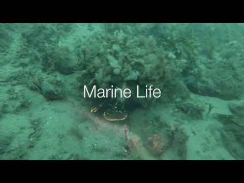 Marine Life Trailer