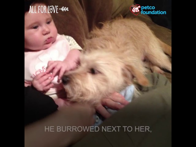 Our sweet rescue dog comforts our sick baby girl! | Petco Foundation