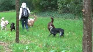 mini cani rando cours collectif jeux canins 6 octobre 2012 1 au chateau