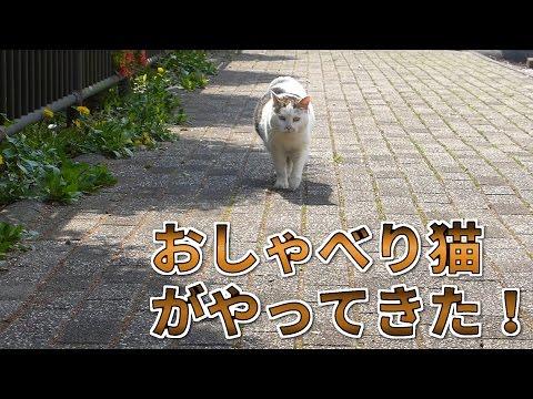 【野良猫】おしゃべり猫がやってきた! - Talking cat come! -
