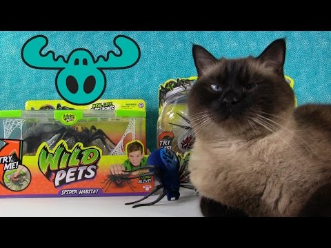 Tricky Cats Full Case Unboxing Kidrobot Toy Review