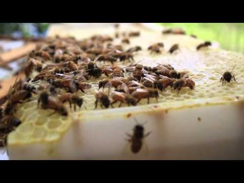 What's Killing the Bees