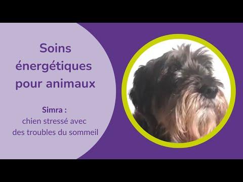 Découvrons en vidéo une séance de soins énergétiques pour un chien
