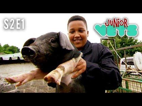 Junior Vets | S2E1