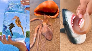 Catching Seafood  Deep Sea Octopus (Catch Crab, Catch Fish)  #124