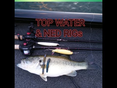 Lake Don Pedro Bass Fishing. (TOP WATER & NED RIGs)