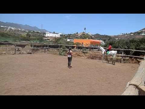 caballos-telde---aprender-a-montar-a-caballo