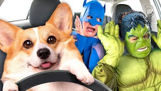 Superheroes Surprise Funny Dog With Dancing Car Ride