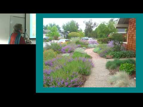 Converting a Lawn to a Native Plant Garden 1