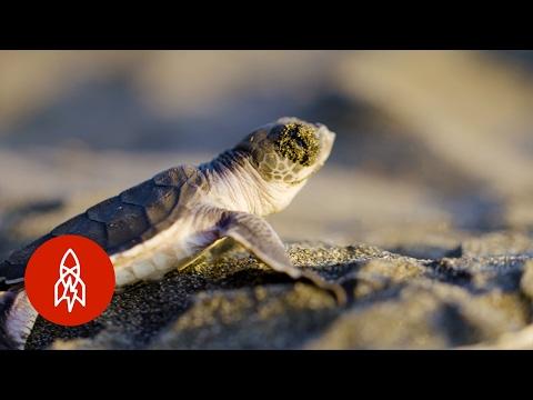 Meet The Team Protecting Costa Rica's Sea Turtle Mecca