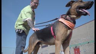 Prison Dog Training Program