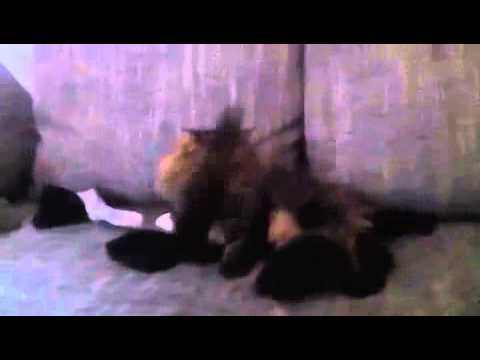 katze macht hitler nach youtube. Black Bedroom Furniture Sets. Home Design Ideas