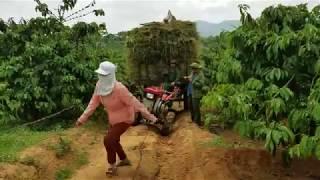 Pha lên dốc rất khó khăn của xe công nông chở lúa