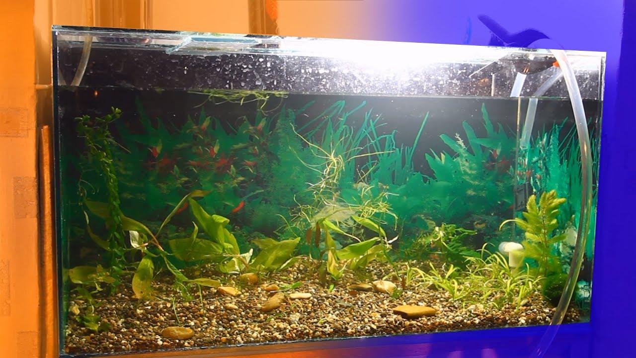 запуск аквариума пошаговая инструкция с фото нашем доме такой