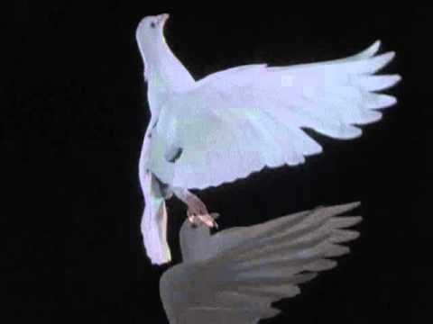 The Life of Birds   02   Mastery of Flight