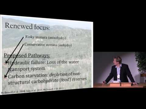 Drought-driven Tree Mortality and Climate Change: What Have We Learned so Far?
