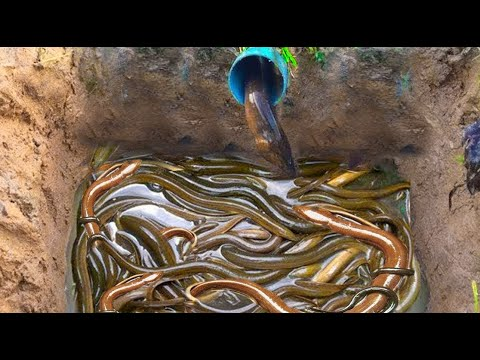 Amazing Smart Girl Deep PVC Hole Catch A Lot Of Eels in Cambodia