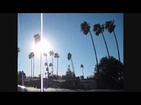 Palm Trees Sway In High Winds Around The Bay Area (12-30-2014)